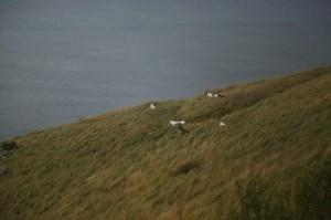 Albatros_img_0797