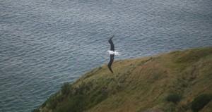 Albatros_img_0872