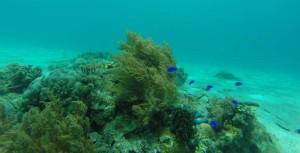 Fische2