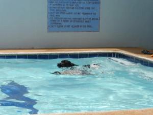pooldog